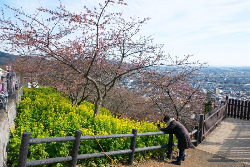 桜の季節にはまだ早い?