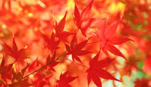 🍁秋のイベントのお知らせ🍁