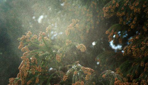 辛い花粉シーズンに おすすめのグッズ